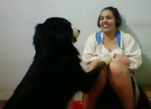 Condição Cão (1)(1)